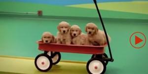 Beneful dogs