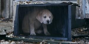 Budweiser-lost dog