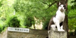 hiroshima-cat-view