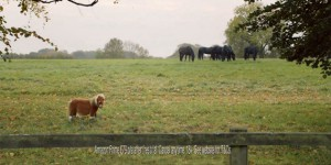 amazon-tvc-a-lonely-little-horse-jpgtop-20151123