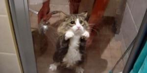 cotto-brand-meow-tvc-jpgtop