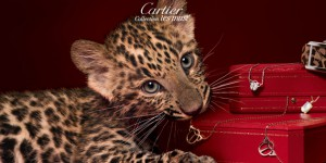 cartier-0412-cover