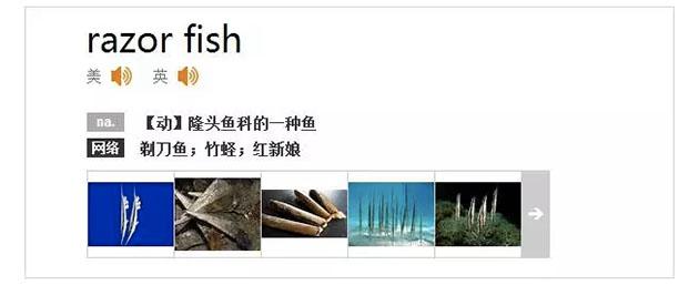 razorfish-1201-02