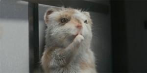 起亚秀尔-仓鼠-头图