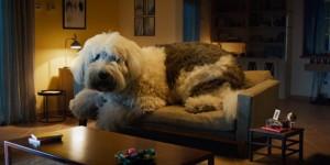 doug-the-dog-hed-page-2019