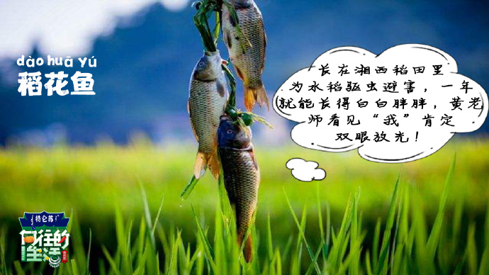 向往的生活3-稻花鱼