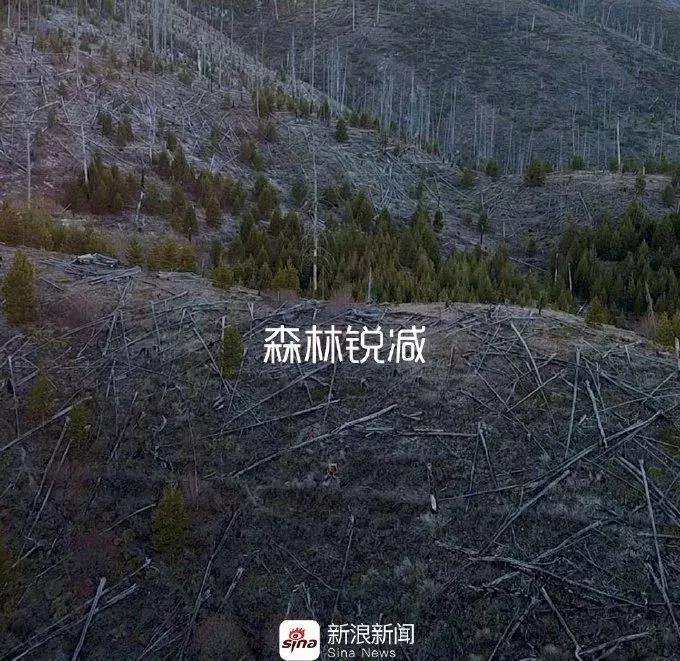 sina-earth day2019-1